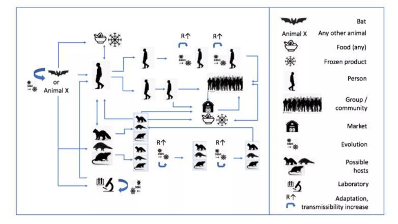 Откуда появился коронавирус: исследование ВОЗ в Ухане не дает окончательных ответов о происхождении COVID-19