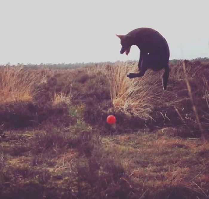 """Комичные """"провалы"""" собак, которые попали на камеру: заряд хорошего настроения обеспечен"""