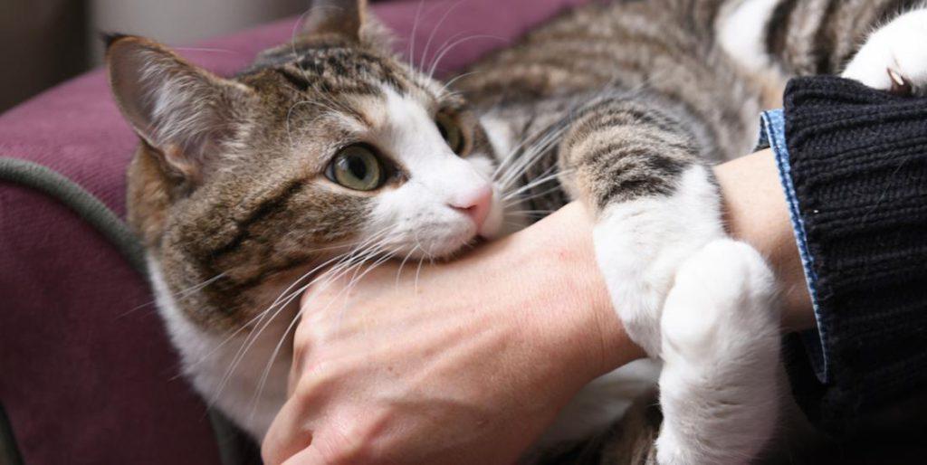 Оказывается, кота надо гладить правильно: каких зон избегать, чтобы ему понравилось