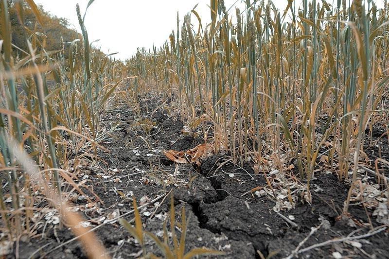 Метеоролог предупредил об угрозе летней засухи в некоторых областях РФ