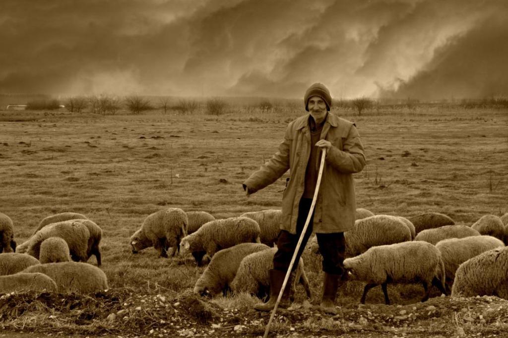 Главный фактор долголетия установили шотландские ученые. А помогли им в этом дикие овцы