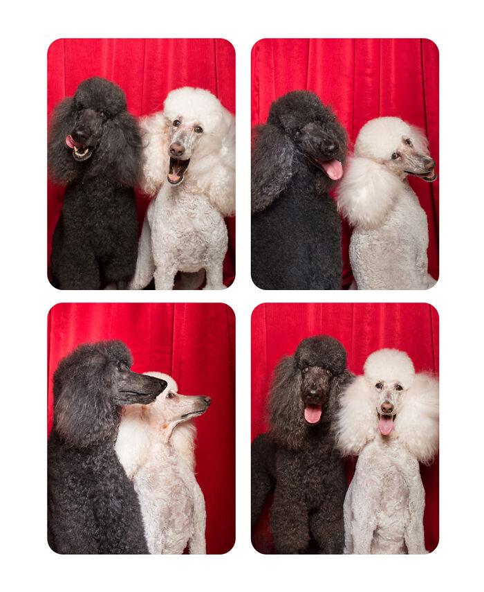 Хвосты из будки: фотограф делает необычный проект, снимая собак разных пород в фотобудке