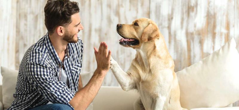 Мы нарушаем собственные правила: 3 ошибки в общении с собакой, которые ее раздражают