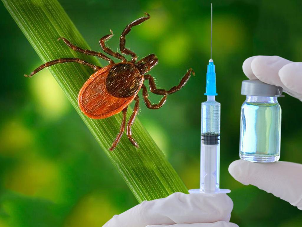 Международная группа ученых нашла антитела, которые могут защитить от клещевого энцефалита