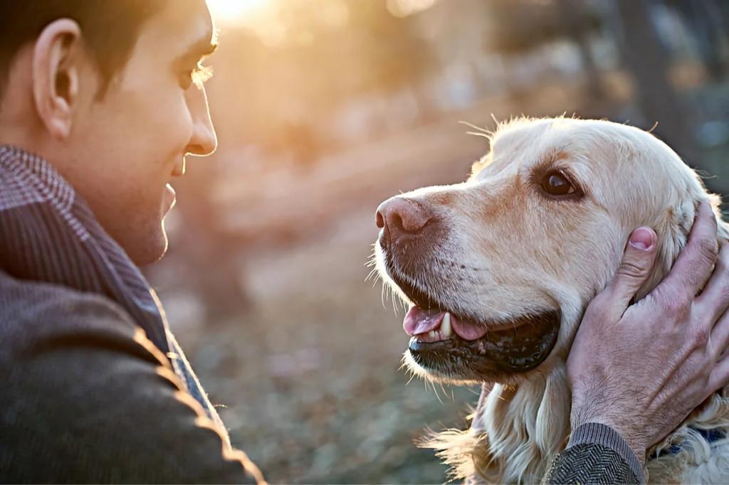 Ученые выяснили, способны ли собаки ревновать, если их хозяин уделяет внимание другому псу