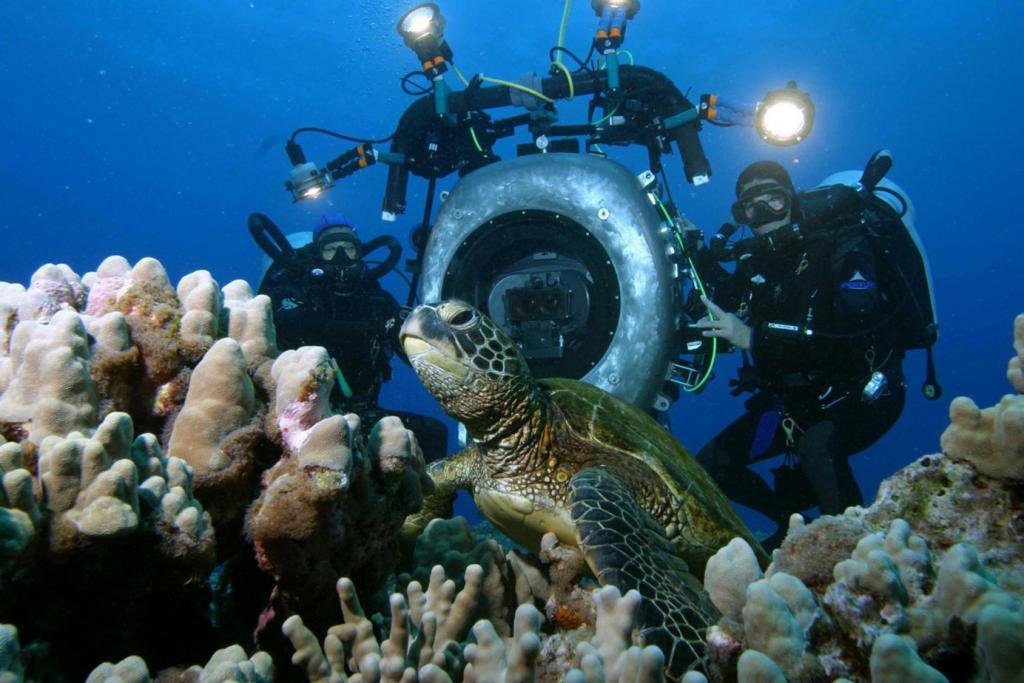 Ученые раскрыли тайну черепах, которым удается переплывать холодный Тихий океан (а это путь в 14 500 км)