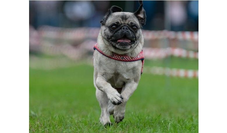 Национальный день домашних животных 2021: 10 милых фотографий щенков, мимо которых сложно пройти