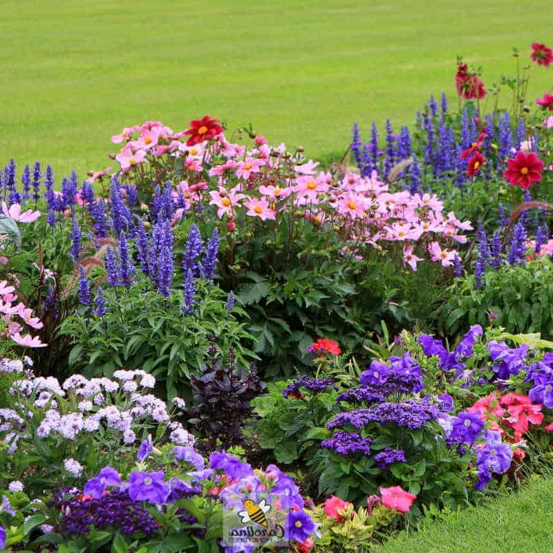 Для хорошего урожая: как сделать сад более привлекательным для пчел (фиолетовые цветы, миска с водой и другие советы)