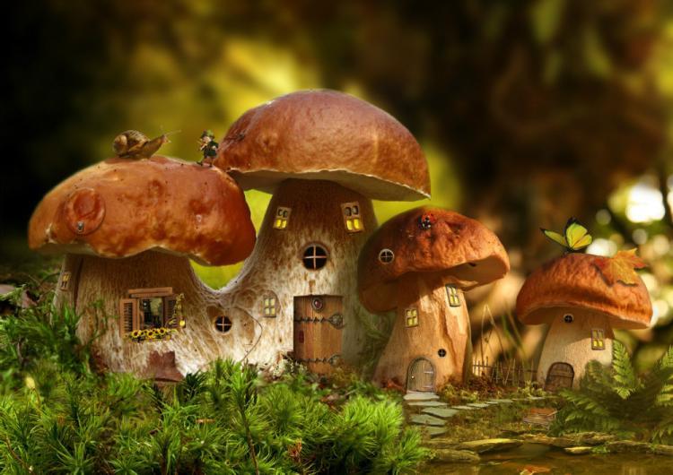 Грибы живые и мертвые: архитекторы предлагают выращивать дома из мицелия