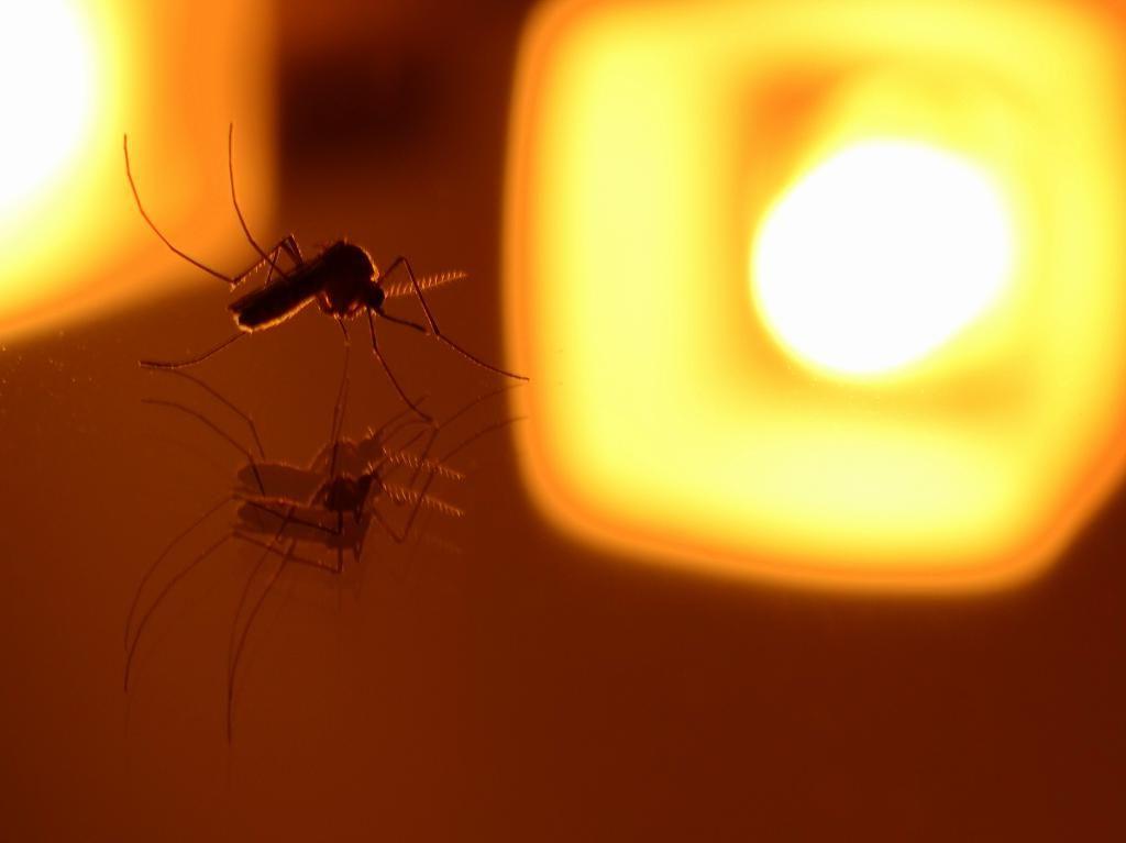 Эксперты предупредили россиян о надвигающихся полчищах комаров