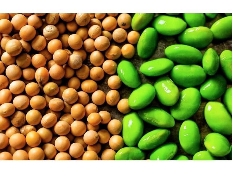 Соевые бобы, масличные культуры и зерно: россиянам названы самые быстро дорожающие продукты питания