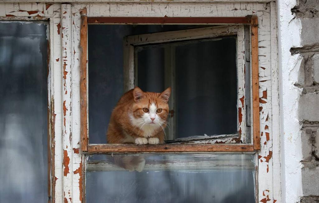 Собачку не отдам: в России приняли закон о запрете изымать домашних животных за долги