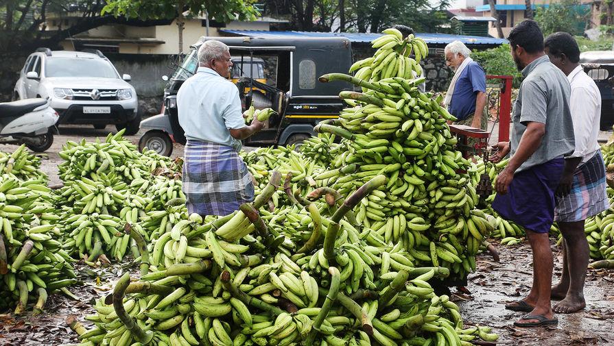 Самый распространенный сорт бананов на грани исчезновения. Всему виной почвенный грибок