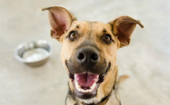 Каждая собака индивидуальна, поэтому определяем визуально: сколько нужно корма собакам