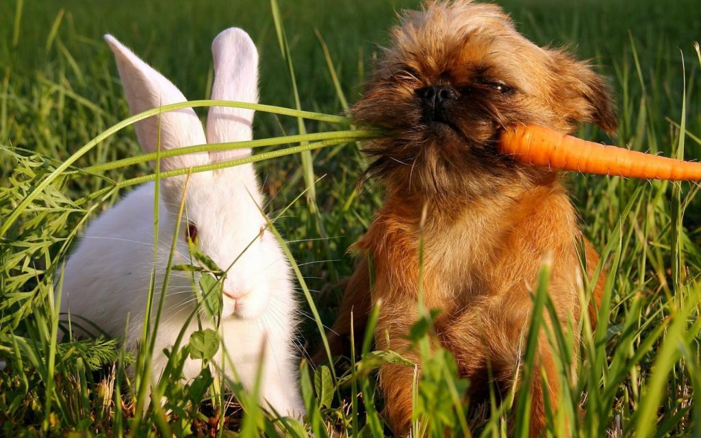 Сытый пес - довольный пес: 8 продуктов, которые сделают вашу собаку счастливой