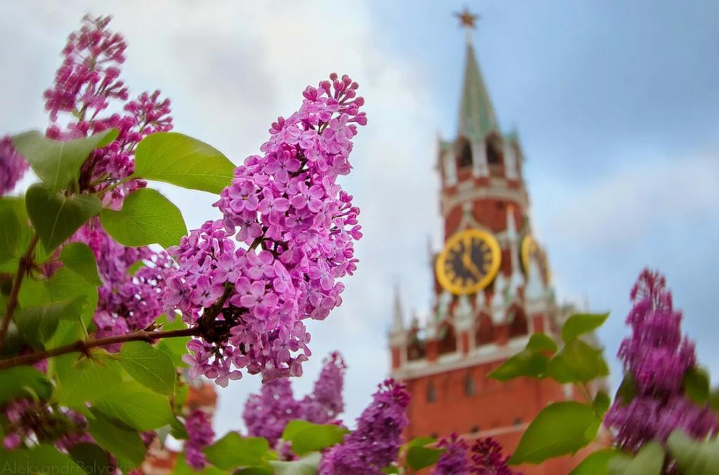 Синоптики обещают россиянам комфортную погоду в мае