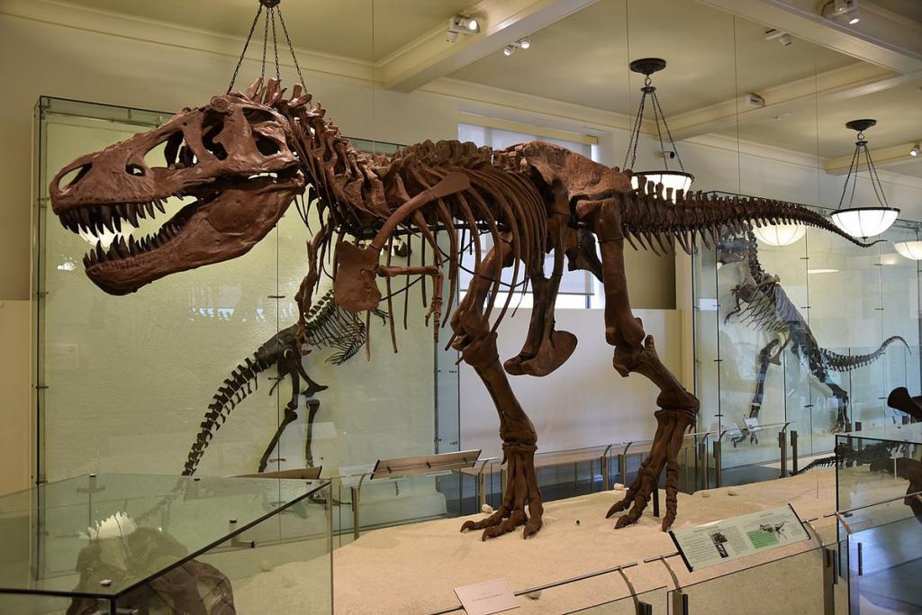 Чем крупнее существо, тем ниже плотность его популяции: палеонтологи подсчитали, сколько тираннозавров жило на планете (цифра не впечатлила ученых)