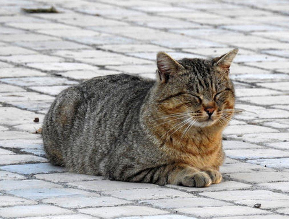 Среди многих положений сна кошки есть одно, которое указывает, что она очень крепко спит (фото)