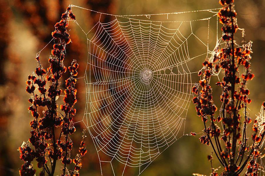 Звучание обычной паутины: ученые открыли новые вибрации (видео)