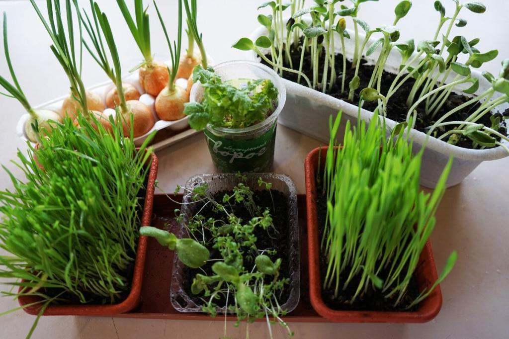 Частые ошибки и полезные гаджеты: как вырастить еду на подоконнике, если вы ничего в этом не понимаете