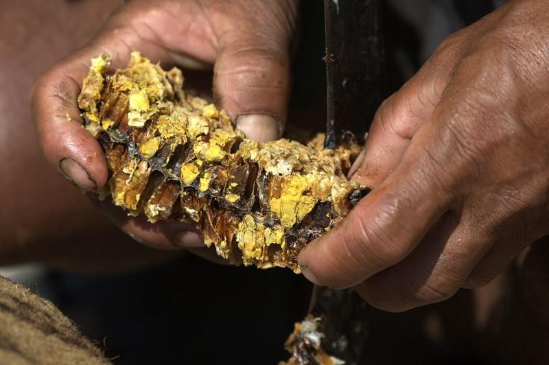 Исследовав древние керамические горшки, ученые нашли доказательства добычи меда 3500-летней давности