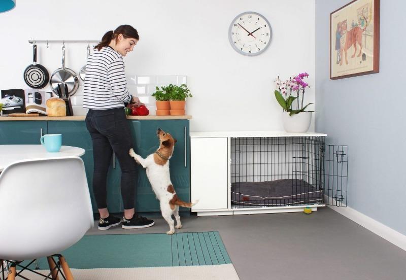 Число домашних собак в России не перестает расти: как завести щенка и подготовиться морально и физически