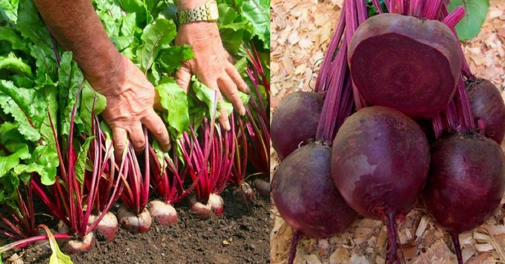 Ученые признали популярный овощ русской кухни полезным для поддержания здоровья в зрелом возрасте