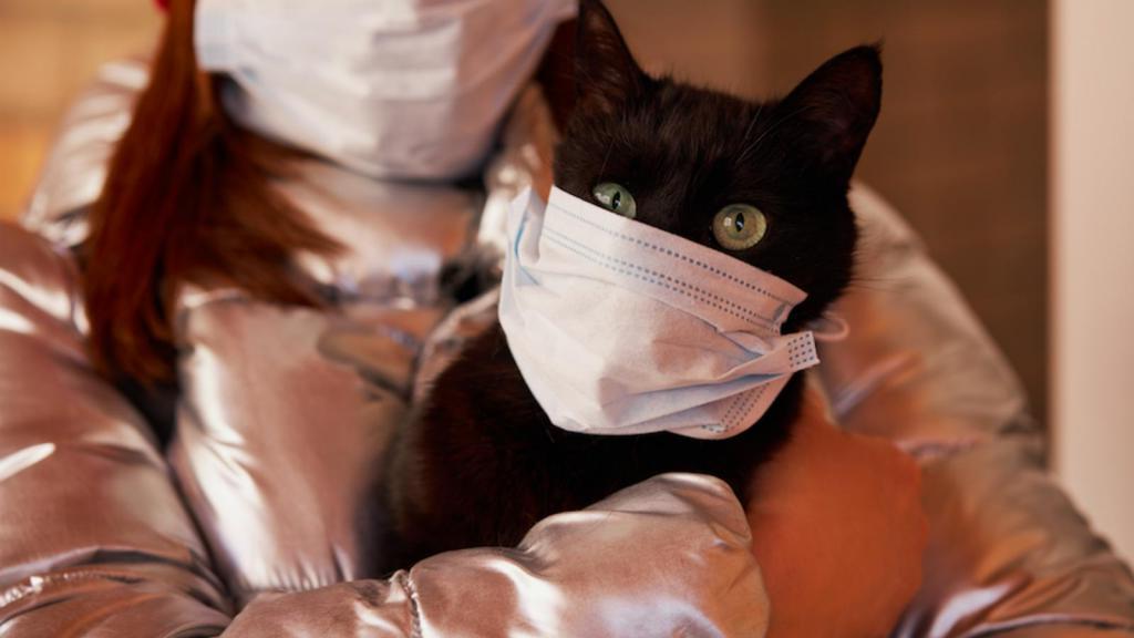 Под подозрением собаки и кошки. Ученые считают, что британский штамм коронавируса мог появиться среди животных и только потом передаться человеку