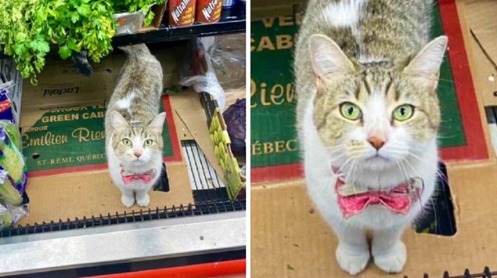 Люди делятся фото кошек в небольших магазинах. Животные выглядят так, как будто владеют ими