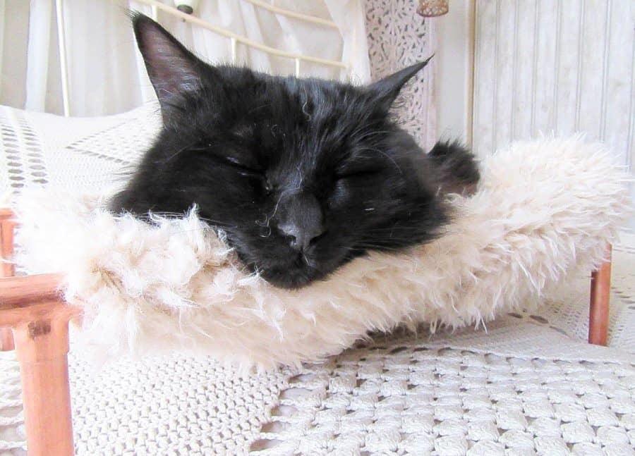Как из нескольких труб и старого пушистого свитера сделать для кота кровать. Получается симпатично, а затраты минимальные