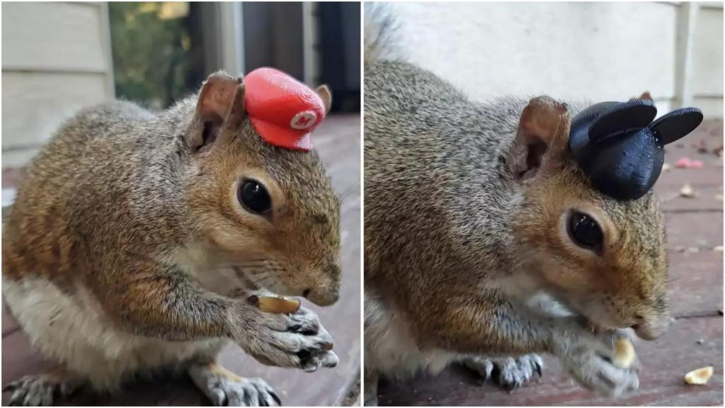 От скуки на карантине парень приручил белок и сделал для них миниатюрные шляпы на 3D-принтере