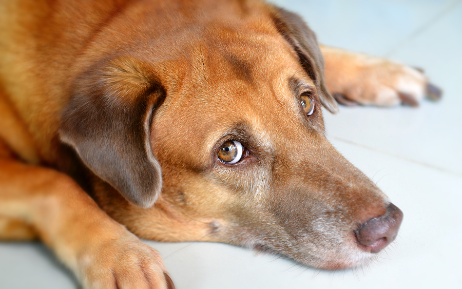 Иногда попадаются и очень ленивые: почему собака не хочет идти на прогулку и что делать в этом случае