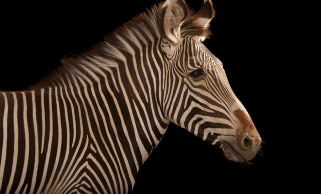 Вероятно, мы их никогда не увидим: животные, которые могут исчезнуть с лица земли