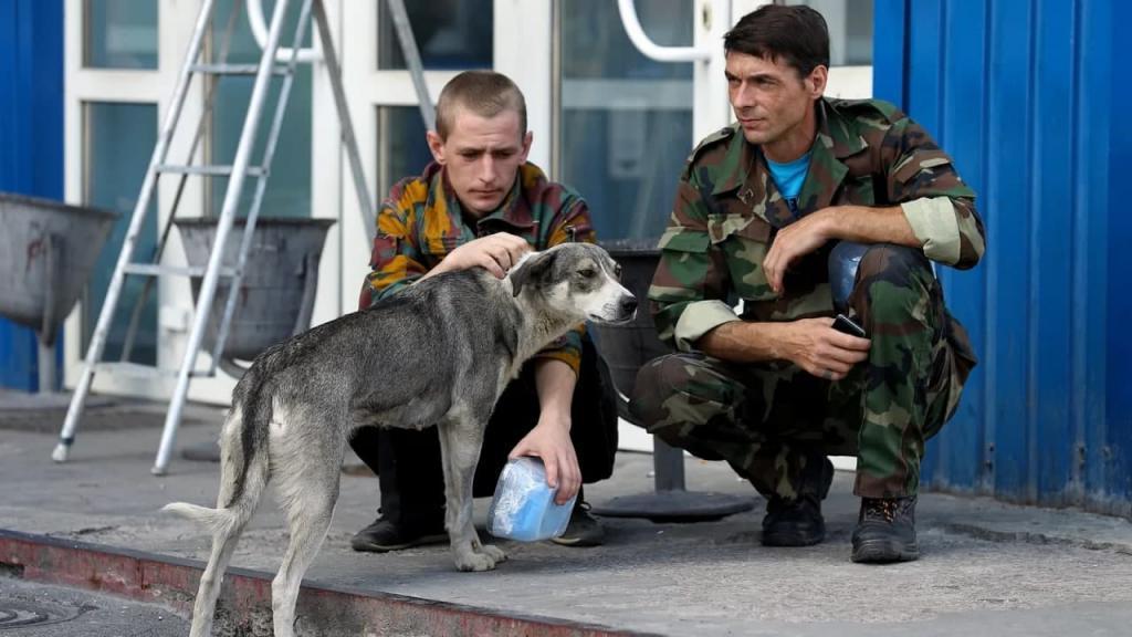 За 35 лет бродячие собаки Чернобыля не утратили связи с людьми