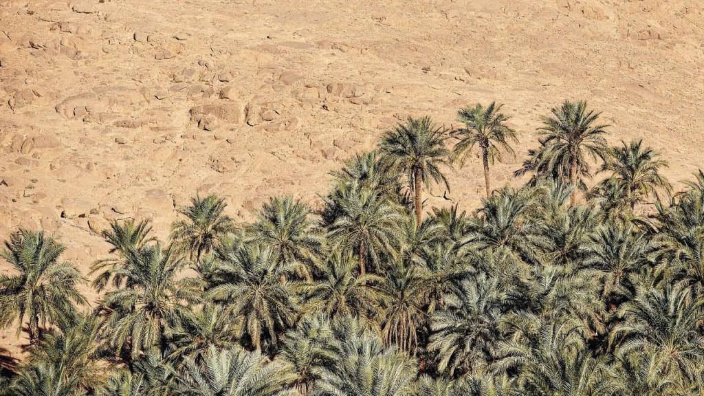Срубить пальму - это преступление: как живут в городе, в котором дождей не бывает по 9 лет