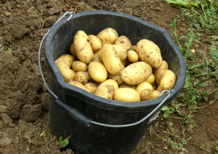 """Кругом """"искусственные"""" овощи? 3 мифа об овощах, которые когда-то придумали бабушки, а мы до сих пор верим в них"""