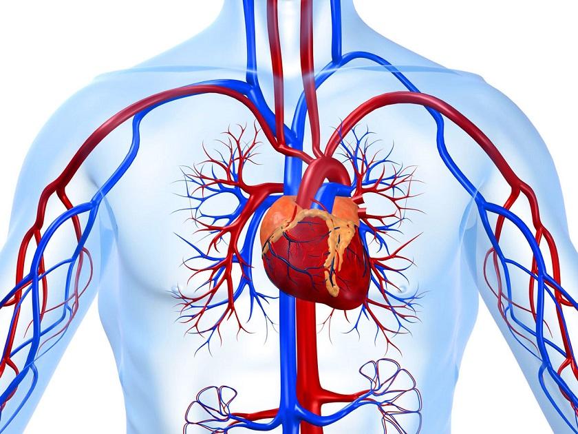 Чтобы работало как часики. Самая оптимальная поза для сна, помогающая сохранить сердце здоровым и сильным