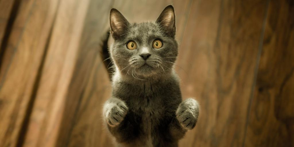 Британские ученые выяснили, как домашние кошки могут улыбаться: эмоция отличается от человеческой