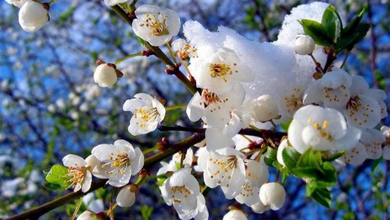 Вальпургиева ночь и день Кузьмы-огородника: приметы и что нельзя делать 1 мая