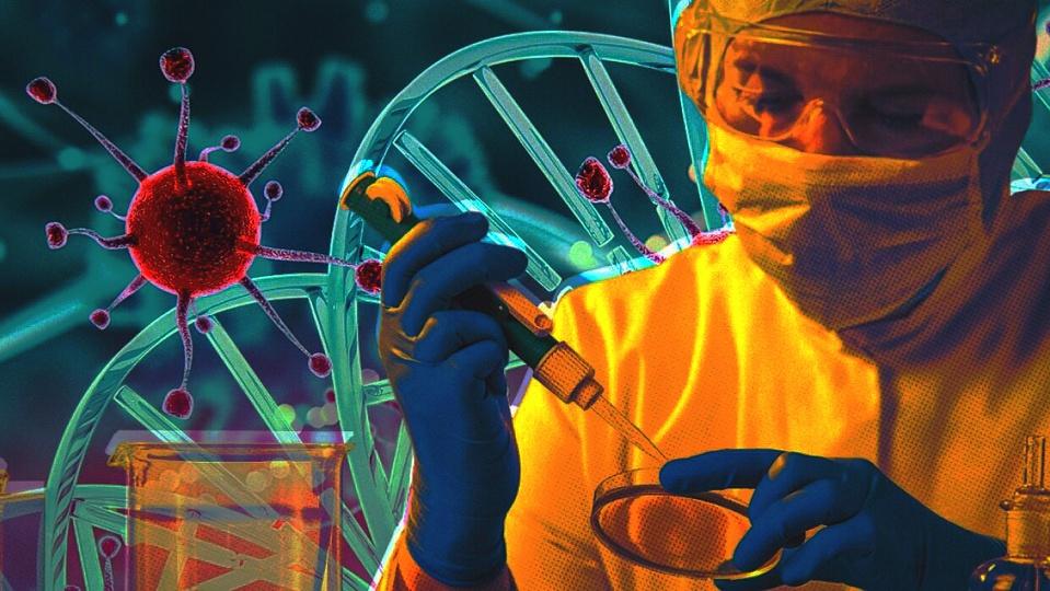 Новое средство? Ученые выяснили, что альпаки способны вырабатывать антитела к человеческим коронавирусам