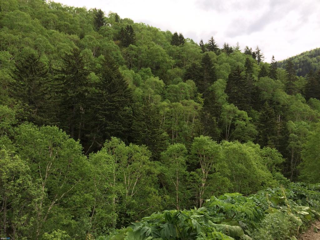 Леса не хватает: во сколько России обходится углеродное регулирование