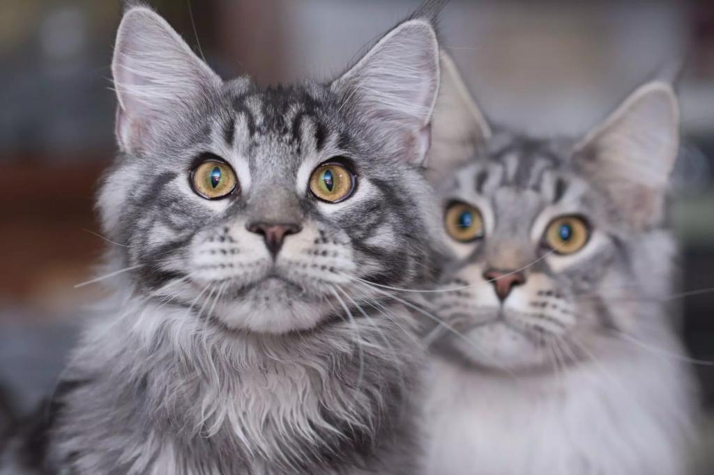 Названы лучшие породы кошек для домашних условий