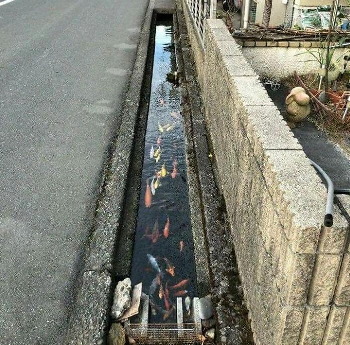 Мороженое, которое не тает, рыбки, живущие в городских каналах. Подборка интересных фактов о Японии