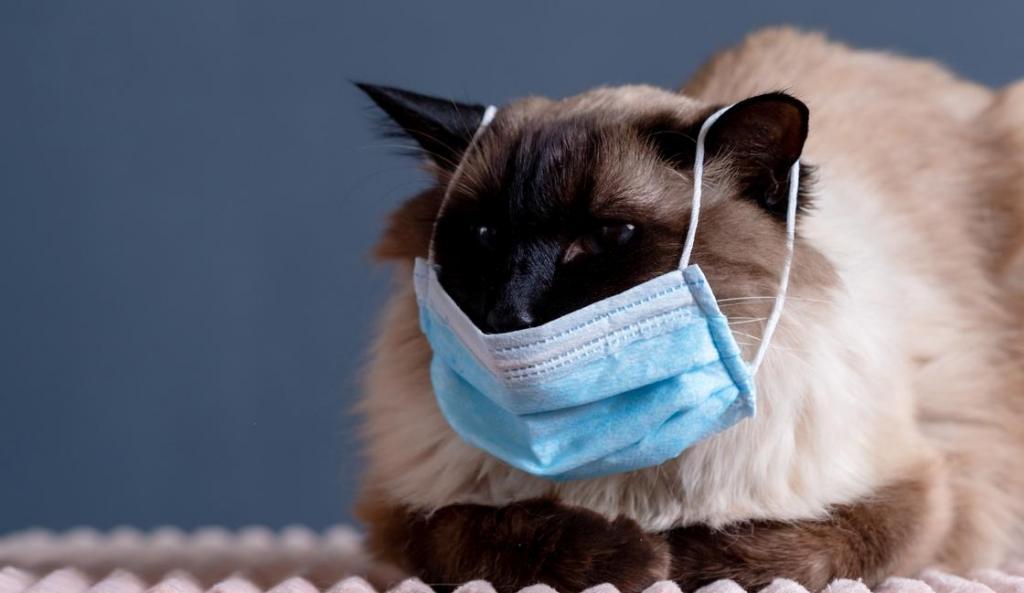 В России бесплатно проверят на коронавирус животных, чьи хозяева переболели COVID-19