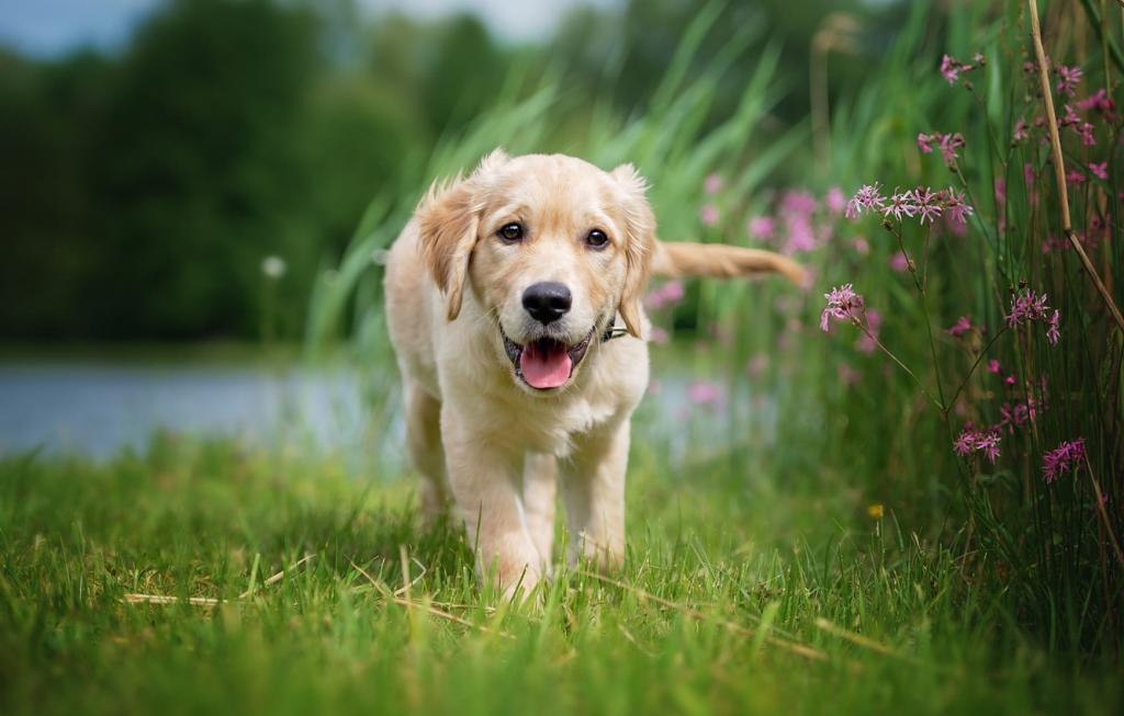 Как защитить собаку от клеща и что делать при укусе: объяснения кинолога