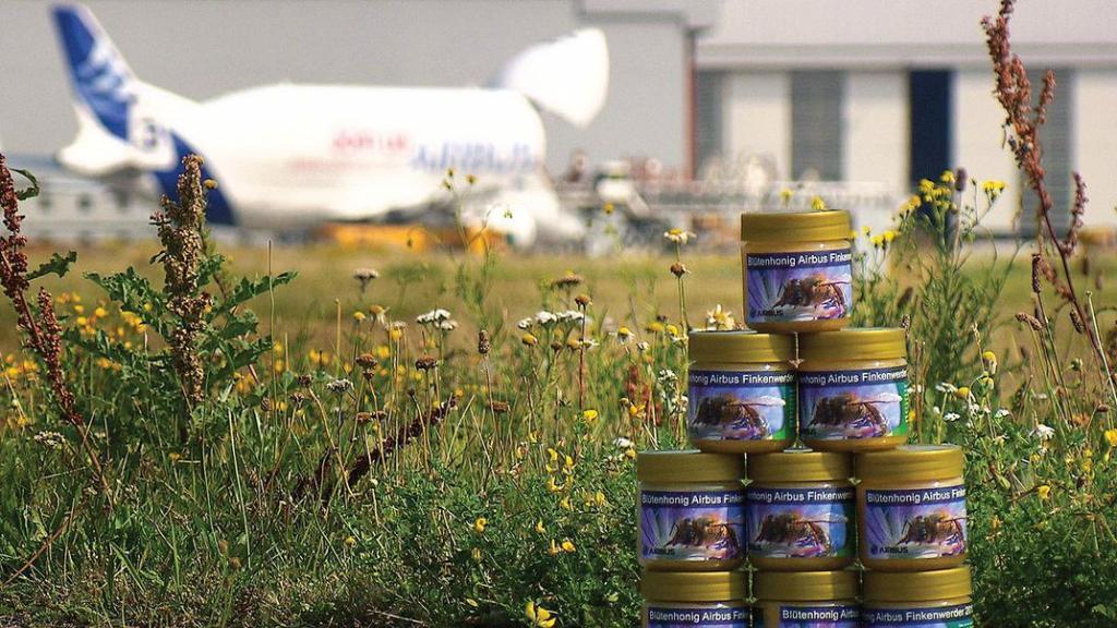 Зачем аэропорты нанимают пчеловодов и как мед показывает качество воздуха