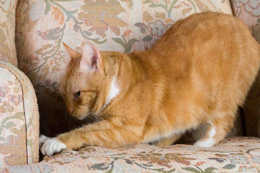 Они не эгоисты. Как кошки проявляют свою любовь к хозяину (5 повадок влюбленного питомца)