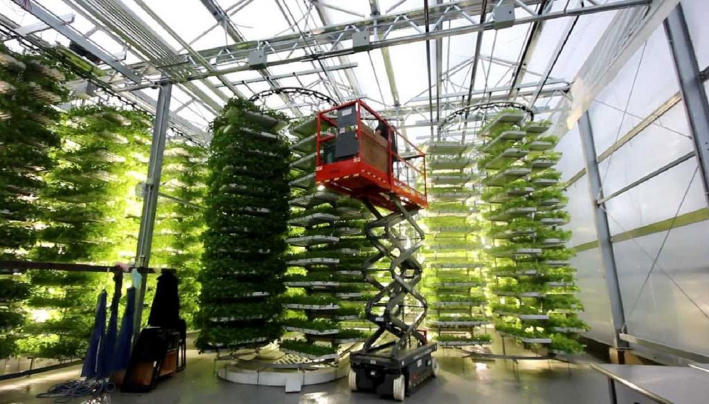 До шести урожаев корнеплодов в год: российские ученые создали вертикальную ферму для выращивания семенного картофеля