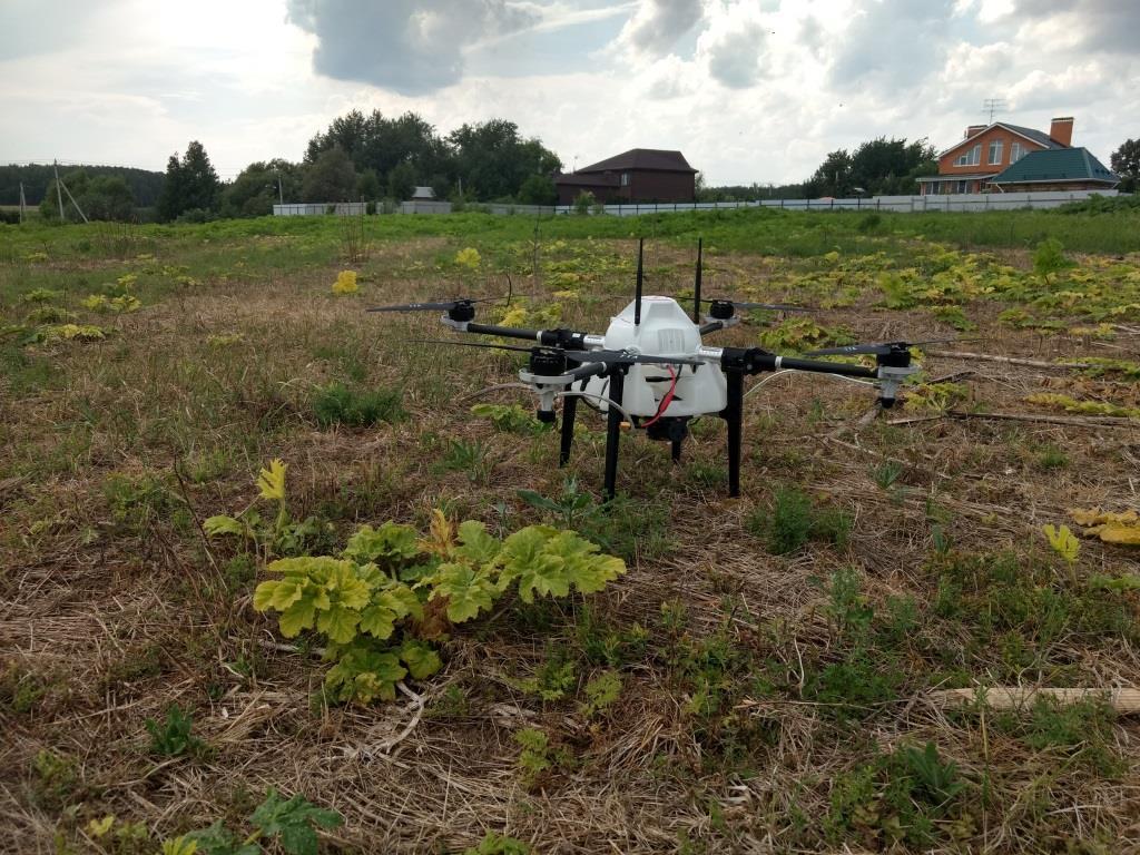 В России дроны научили искать борщевик Сосновского. Точность выявления составляет почти 97 %