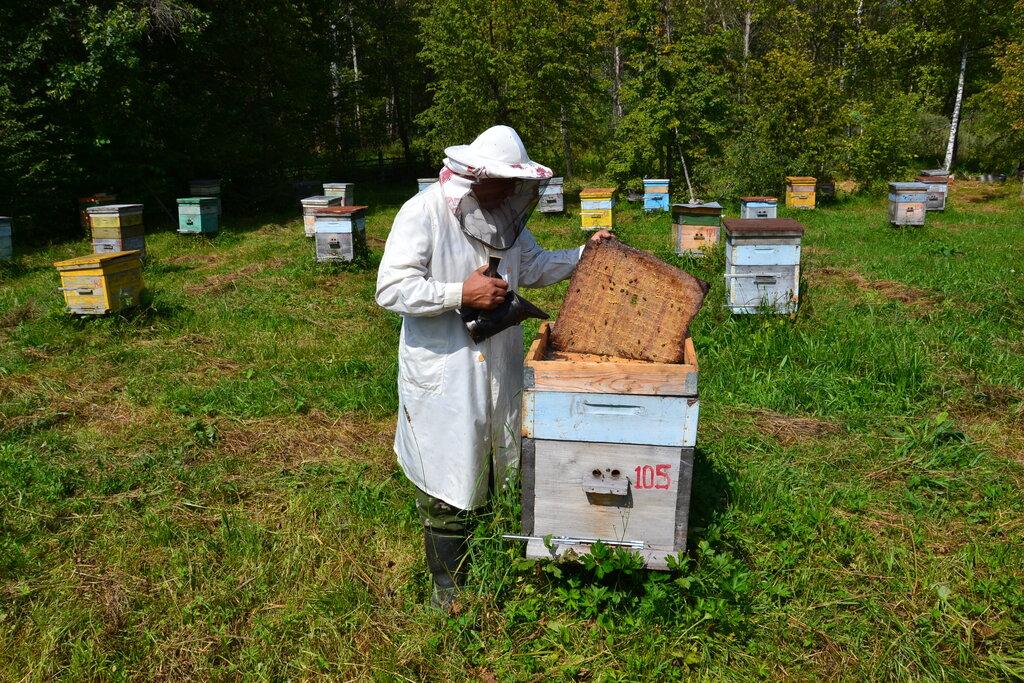 Перейдут ли аграрии на менее опасные пестициды: чего ждут от нового сезона пасечники Ставрополья